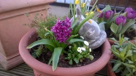 Clumsy Rabbit in Flowerpot