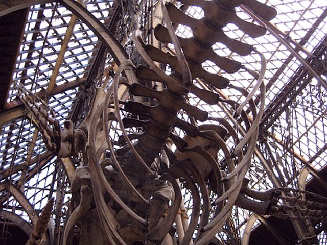 Dinosaurs and Ironworks