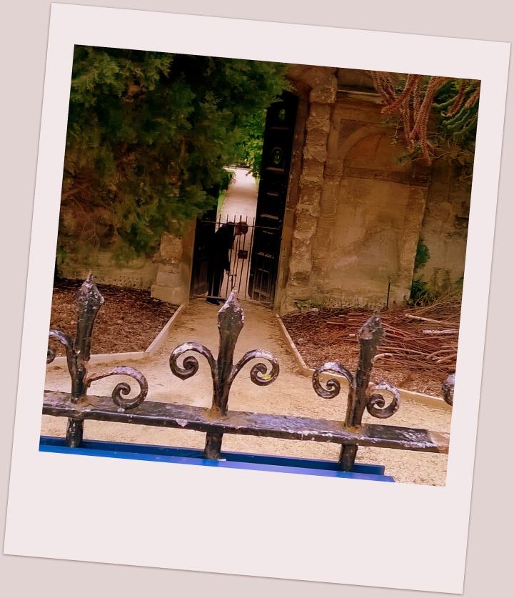 Polaroid Botanical Garden