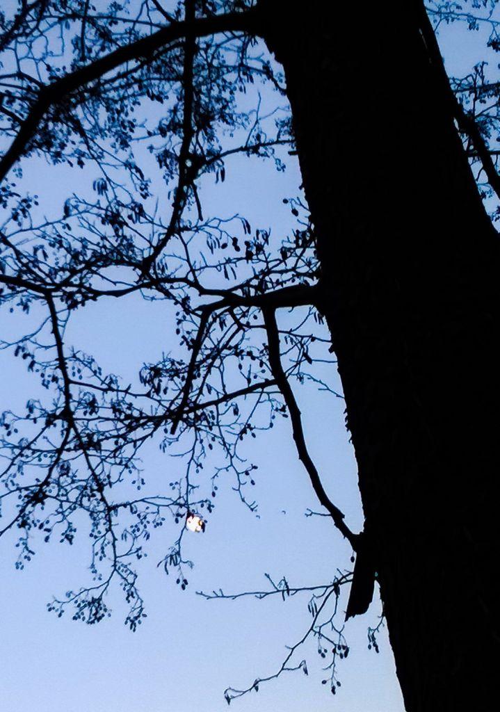 Erlen und Mond