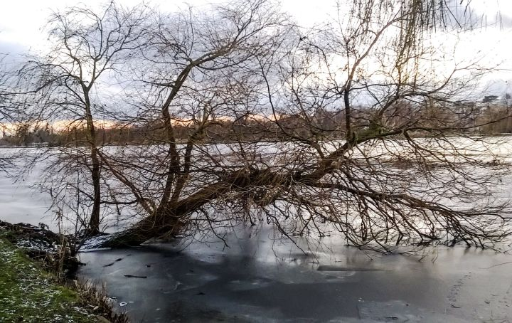 January and Willow Tree